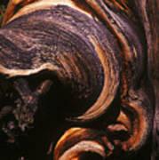 Natures Sculpture Art Print