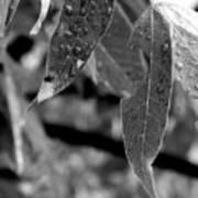Nature's Tears Art Print