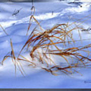 Nature's Winter Abstract #3 Art Print