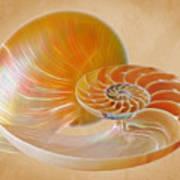 Nautilus Golden Glow Art Print