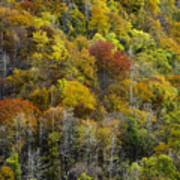 Nc Fall Foliage 0561 Art Print