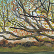 Near Fletcher's Boathouse Art Print