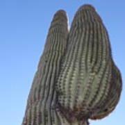 Wickenburg Saguaro  Art Print
