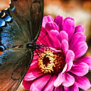 Nectar Feast Art Print