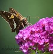 Nectaring Moth Art Print