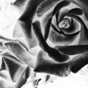 Negative Roses Art Print