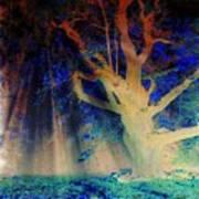 Negative Tree And Sunbeams Art Print
