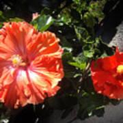 Neon-red Hibiscus Flowers 6-17 Art Print
