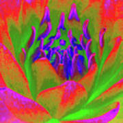 Neon Water Lily 02 - Photopower 3371 Art Print