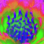 Neon Water Lily 03 - Photopower 3372 Art Print