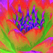 Neon Water Lily - Photopower 3370 Art Print