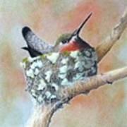 Nesting Anna Art Print