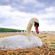 Nesting Mute Swan At Abbotsbury - Impressions Art Print