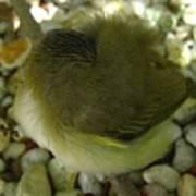 Nestling Bird Art Print