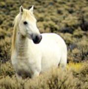 Nevada Wild Horses 3 Art Print