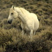 Nevada Wild Horses 4 Art Print