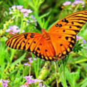 Windows From Heaven Orange Butterfly Art Print