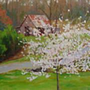 New Blossoms Old Barn Art Print