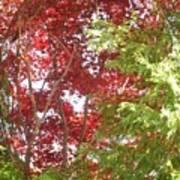 New England Autumn Globe Art Print