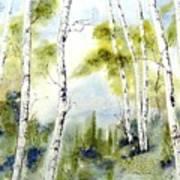 New England Birches Art Print