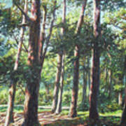 New Forest Trees With Shadows Art Print
