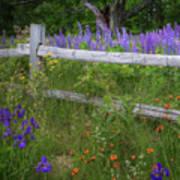 New Hampshire Wildflowers Art Print