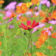 New Jersey Wildflowers Art Print