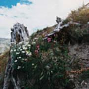 New Life Mt Saint Helens Wa Art Print