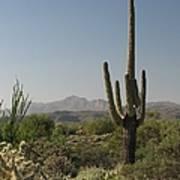 New Mexican Desert Art Print