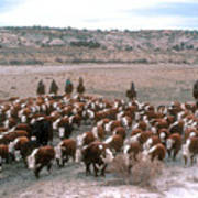 New Mexico Cattle Drive Art Print