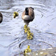 New Spring Baby Geese Art Print