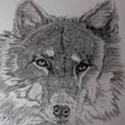 Wolf. Art Print by Cynthia Adams