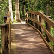 New Wood Bridge Park Trail Art Print