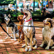 New York City Dog Walking Art Print
