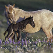 Newborn Filly At Dawn Art Print