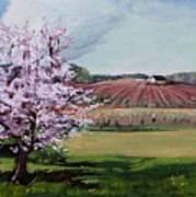 Niagara Vineyards Spring Art Print
