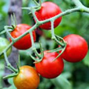 Nice Tomatoes Art Print