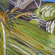 Nick's Coconuts Art Print