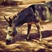 Nigerian Donkey Art Print