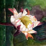 Night Blooming Cereus Art Print