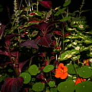 Night Flower's Art Print