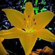 Night Glow Lily Art Print