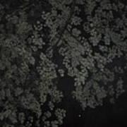 Night Leaves II Art Print
