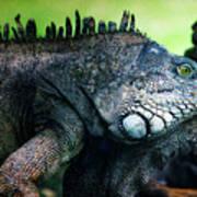 Night Of The Iguana Art Print