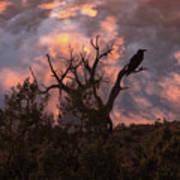 Night Of The Raven Art Print