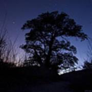 night sky and trees in Molino Canyon Mount Lemmon AZ Art Print