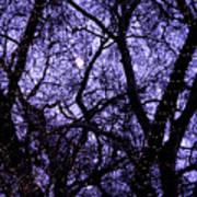 Night Tree Art Print