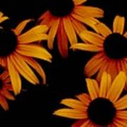 Nighttime Flowers Art Print