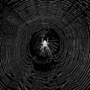 Nighttime Spider And Web Art Print