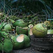 Niu Hawaiian Coconuts Hooululahui Kahekilinui Wailuku Art Print
